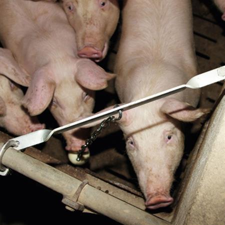 Beißkugel für Mastschweine Ø 75 mm (Schäkel verzinkt)