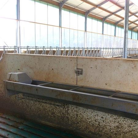 Schnellablauftränke Suevia Mod. 6230 / 230 cm